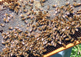 Photo of a beehive - Click to enlarge