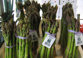 Photo of asparagus - Click to enlarge