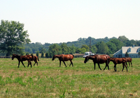 Photo of horses in a field - Click to enlarge