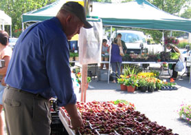 Photo of Secretary Kuperus choosing strawberries at the Millburn Farmers Market - Click to enlarge