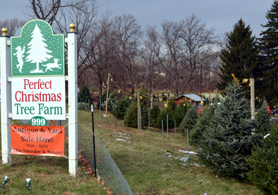 Photo of Perfect Christmas Tree Farm in Lopatcong - Click to enlarge