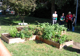 Photo of a school garden in Paterson, NJ - Click to enlarge