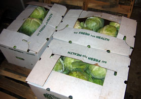 Photo of cabbage purchased with SFPP funds - Click to enlarge
