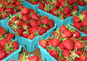 Photo of strawberries - Click to enlarge