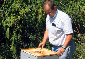 Photo of Tim Schuler inspecting a beehive in Columbus, Burlington County - Click to enlarge