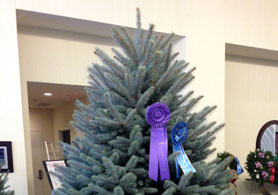 Photo of the Wyckoff winning Christmas tree - Click to enlarge