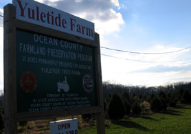 Photo of Yuletide tree farm - Click to enlarge