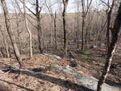 Hopatcong Forest Legacy Partnership