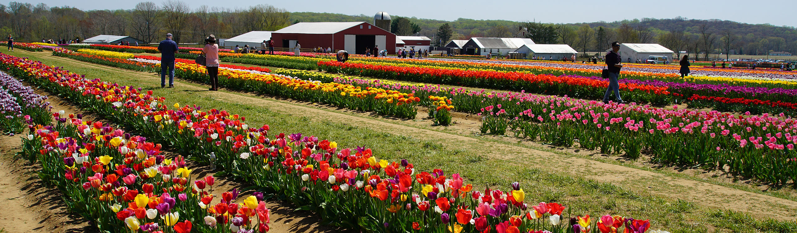 Garden State in Bloom - Holland Ridge Farms Tulip Festival