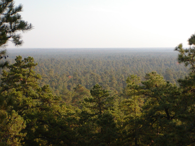 View from Apple Pie Hill fire tower
